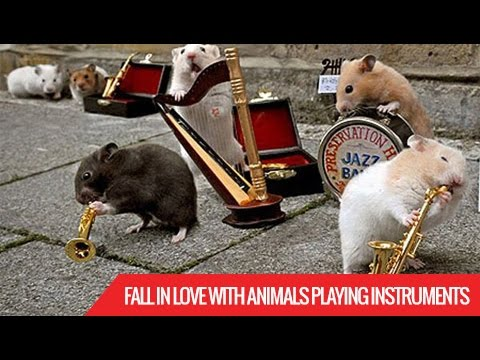 Fall In Love With Animals Playing Instruments