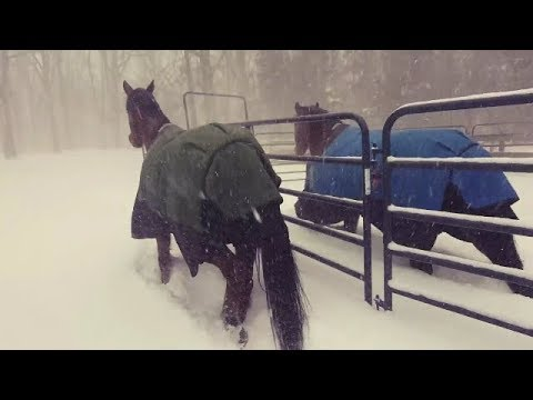 Funniest Animals Playing In Snow Video Compilation january 2018 | Funny animal Videos