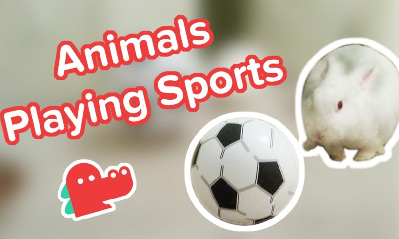 Funniest Animals Playing Sports: Clips Compilation