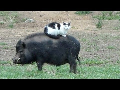 Funny FARM ANIMALS will make you LAUGH EXTREMELY HARD - Funny ANIMAL compilation