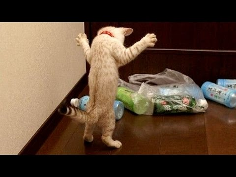 Funny animals are best try not to laugh challenge - Funny animal compilation