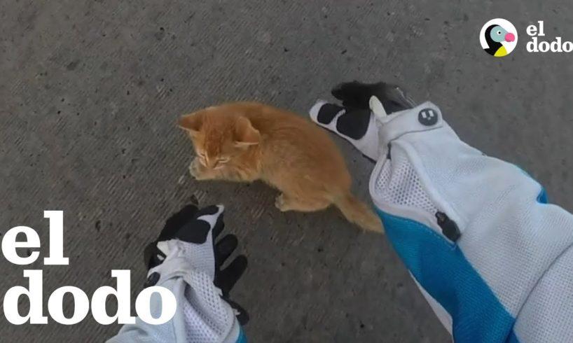 Gatito rescatado en una autopista tiene una hermanita nueva