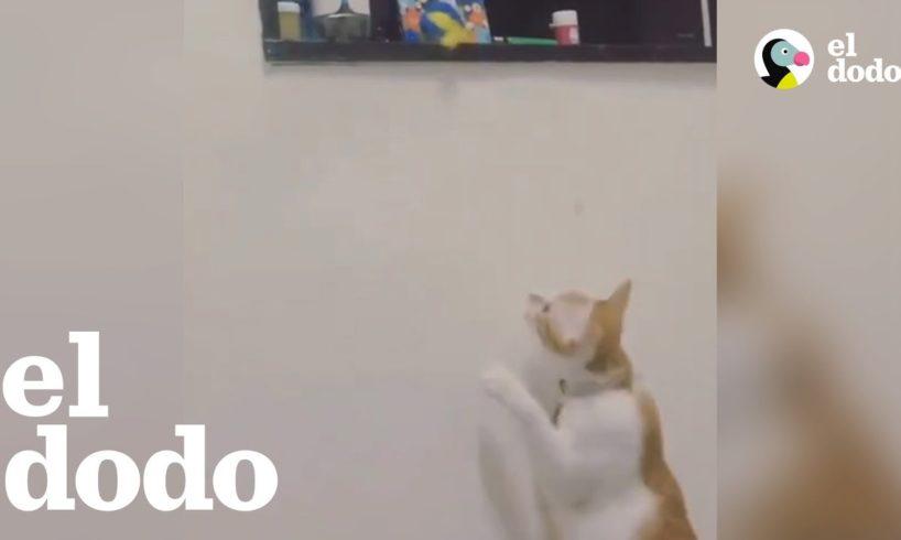Gato agarra juguete para su hermano