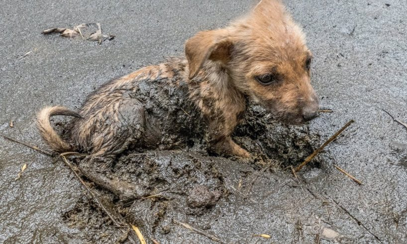 Girl Rescue the Dog stuck in mud give Food and Treatment
