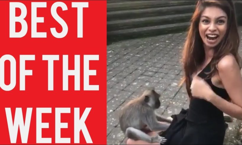 Girl With Curious Monkey Fail and other fails! || Best fails of the week! || December 2018!