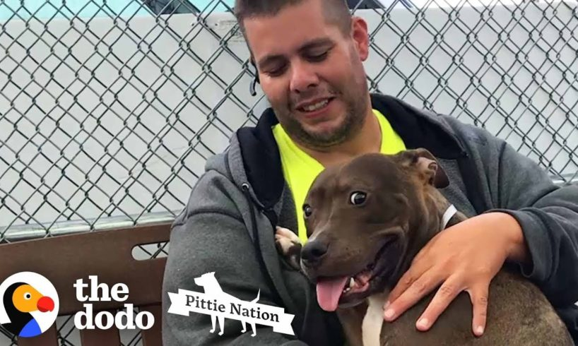 Guy Drives 2,800 Miles To Rescue A Pit Bull | The Dodo Pittie Nation