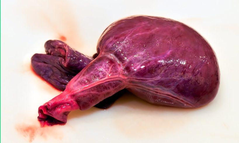 HUGE SHARK HEART in JAPAN!!! Tokyo's WILDEST Seafood Menu!!!