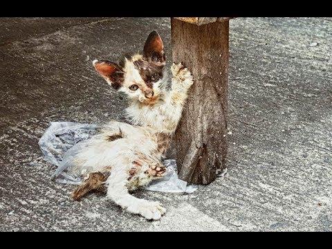 Heartbreaking Video; Injured Homeless Kitten Rescued! #2019