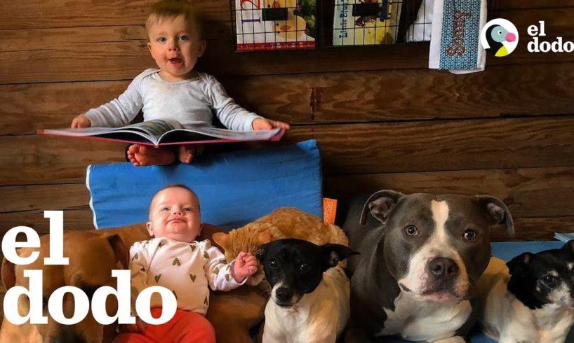 Hermanitos peludos ayudan a criar a dos bebés