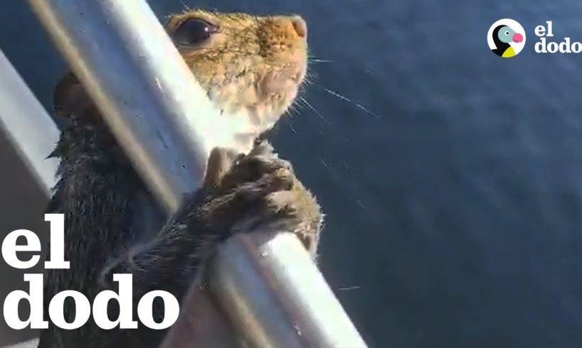 Hombre ayuda a una ardilla atrapada en un lago