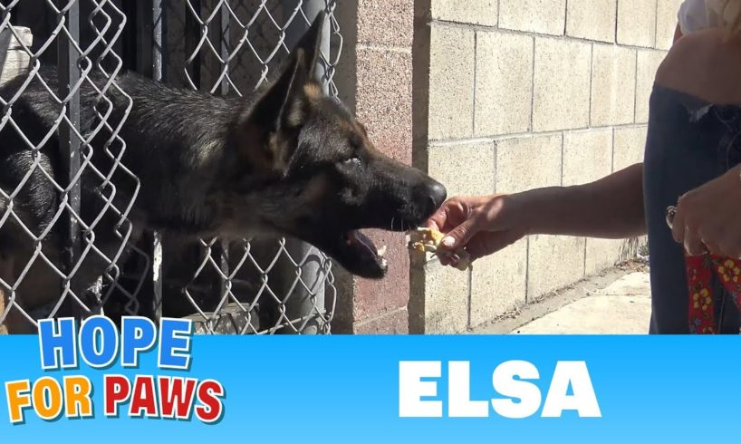 Homeless German Shepherd with an embedded collar and a broken paw needed our help.