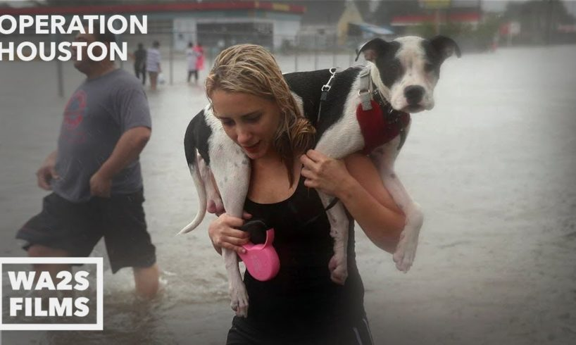 Houston SPCA Accused Of Killing Dogs After Hurricane Harvey - Hope For Dogs | My DoDo