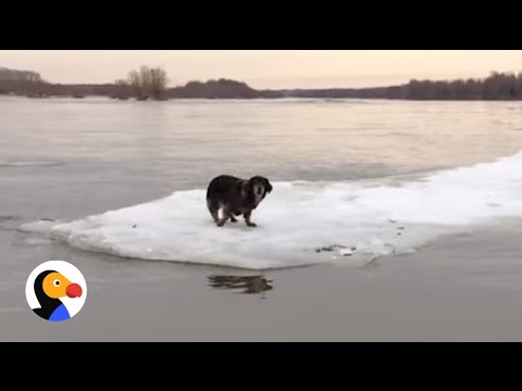 Incredible Dog Rescue: Dog Stranded on Ice Saved by Heroes | The Dodo