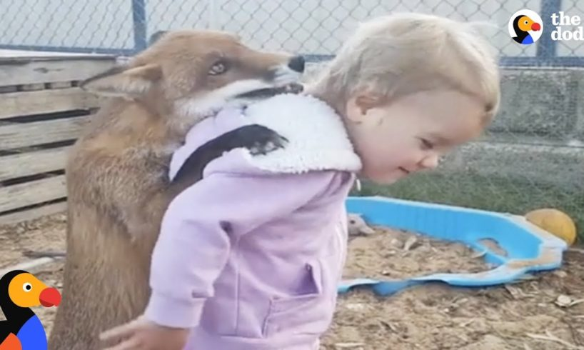 Kids Rescue Animals: Kids Go Above And Beyond To Rescue Animals   The Dodo Best Of
