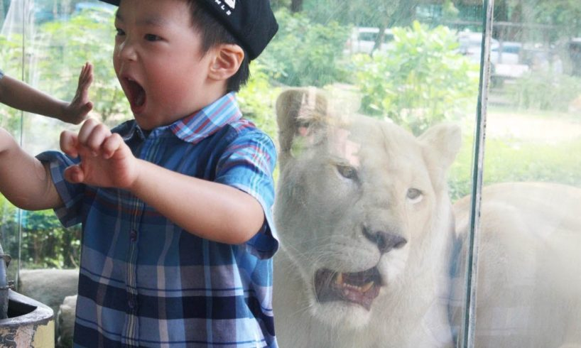 Kids play with Lion at the Zoo: Elephant swimming and cute animals