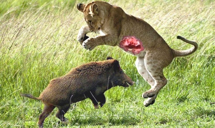 [LIVE] Incredible Big Cats Hunting Skills including Lions Cheetah Tiger Jaguar Leopard