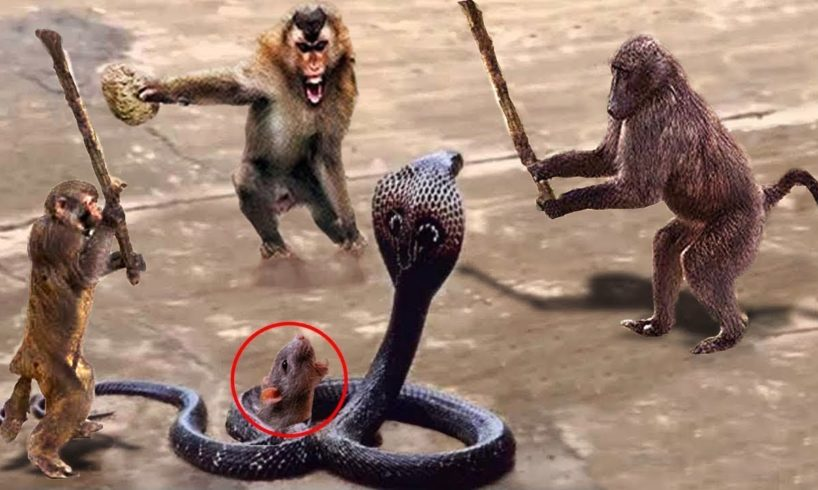 LIVE: Wild Animals Ultimate Fights 2018! Amazing Monkey Rescue Baby Monkey From Snake Hunting