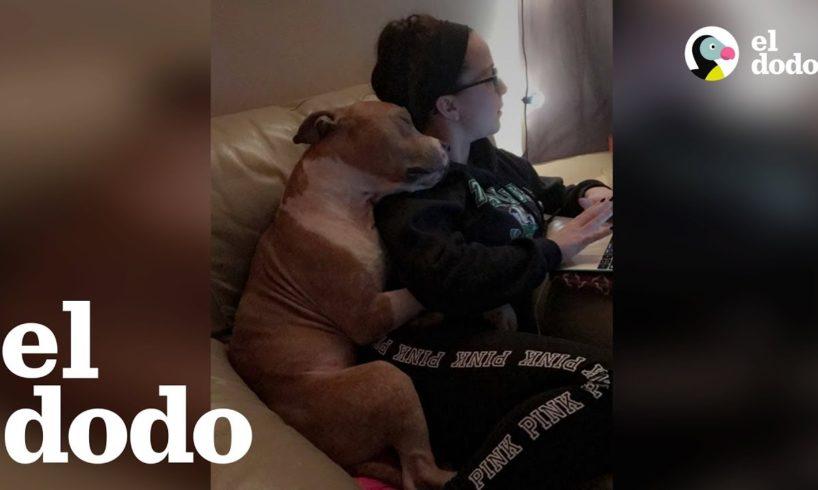 La foto de adopción de este perrito se volvió viral