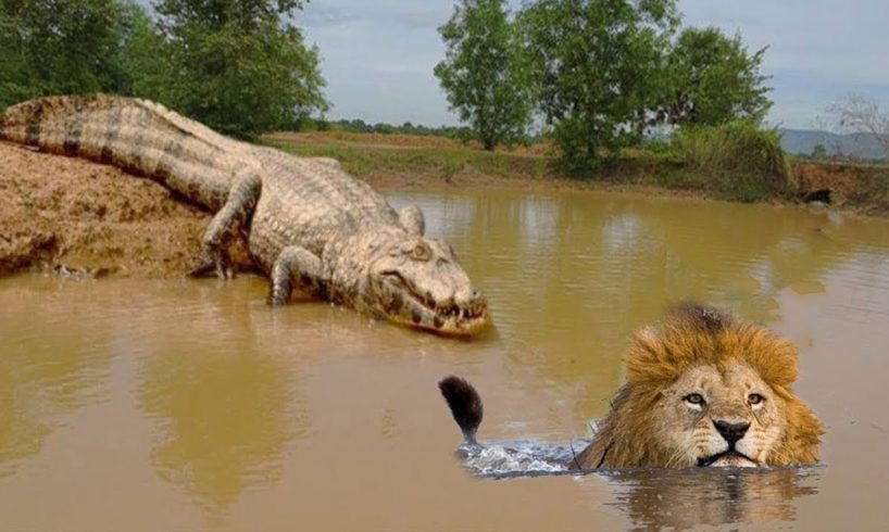 Live King Of Junger vs Lord Of Swamp - Dramatic Animal Fighting! Lion Hyena Crocodile Elephant