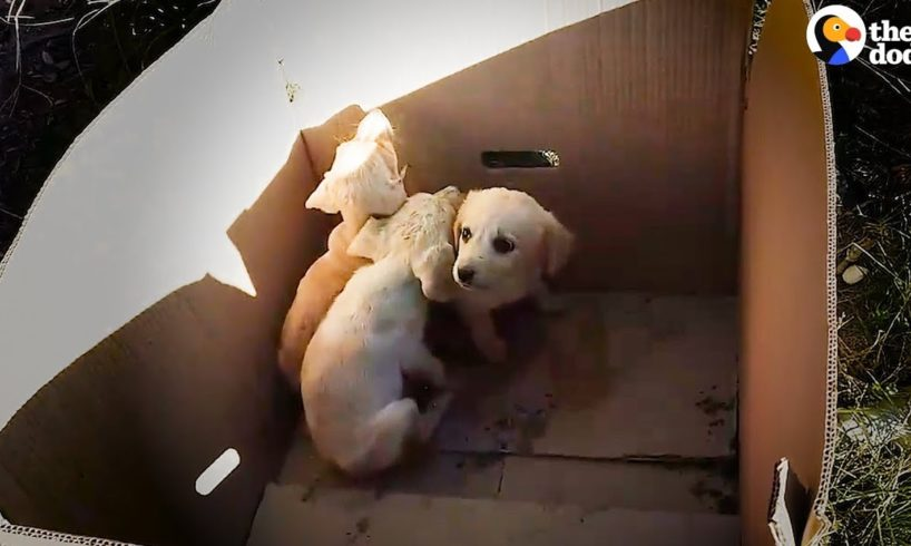 Man Pulls Puppies Out Of Trash Every Single Day | The Dodo