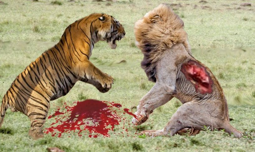 Most Amazing Wild Animal Attacks #9 - Craziest Animal Fights Caught On Camera