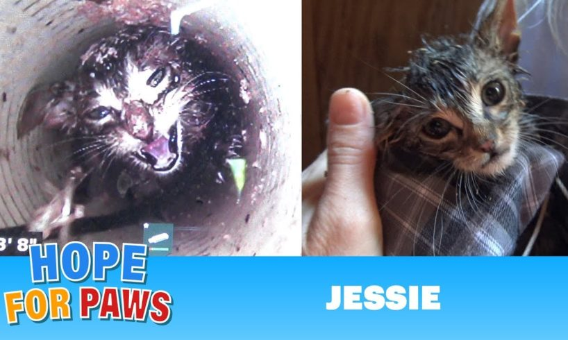 Most URGENT rescue EVER!  Kitten falls 43 ft straight down a water well & cries for help for 5 DAYS!