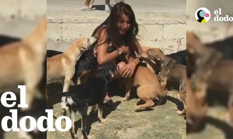 Mujer deja todo para salvar perros callejeros