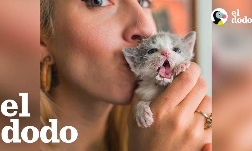 Mujer ha cuidado a cientos de gatitos