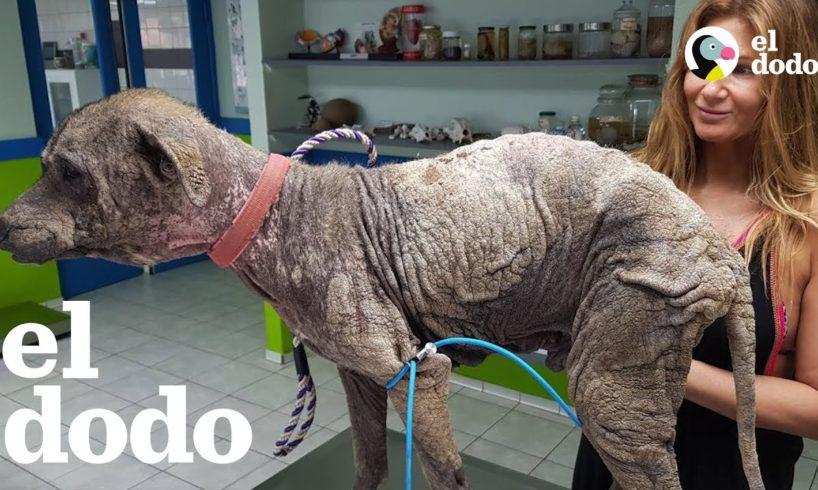 Mujer que estaba de vacaciones rescata a un perro muy enfermito