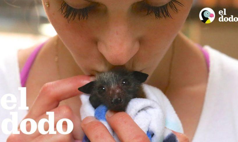 Mujer que sufre por ansiedad no puede dejar de rescatar murciélagos