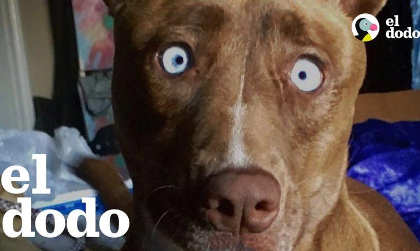 Mujer vio una foto de esta perrita muy única y supo que la quería adoptar