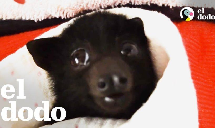Murciélago bebé tiene la más dulce reunión con su mamá