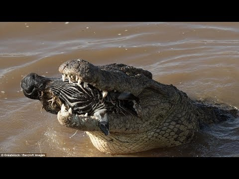 National Geographic Wild - Fight To Survive - Animal Wildlife Documentary - Natgeo Wild