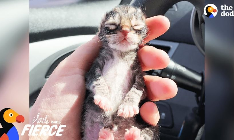 Newborn Kitten Who Was Frozen Solid Grows Up To Be Strong And Feisty   The Dodo Little But Fierce