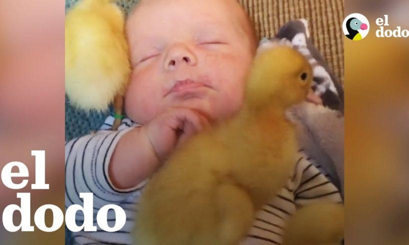 Niños que aman a los animales
