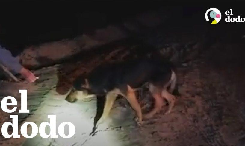 Pareja intenta todo lo posible para rescatar a un perrito abandonado