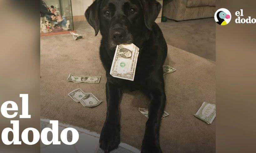 Perrita inteligente colecciona dinero para comprar sus golosinas