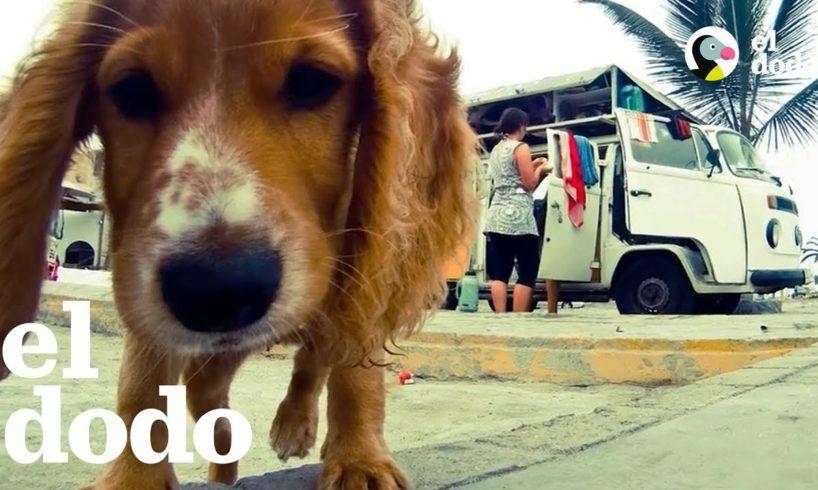 Perrita rescatada en Perú hace un viaje increíble con su familia