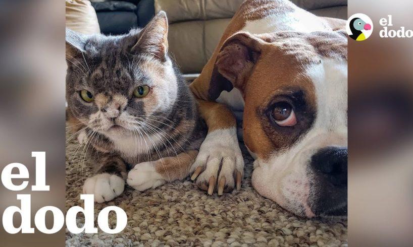 Perrita se enamora de una gata muy especial