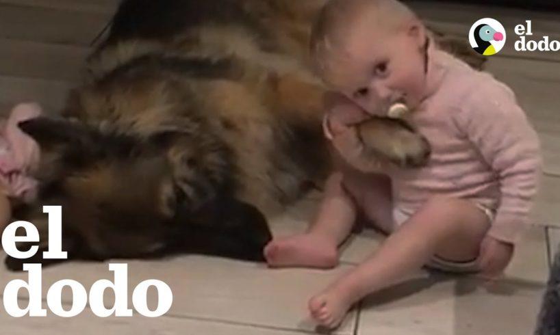 Perrito ama ser el hermano mayor de esta niña
