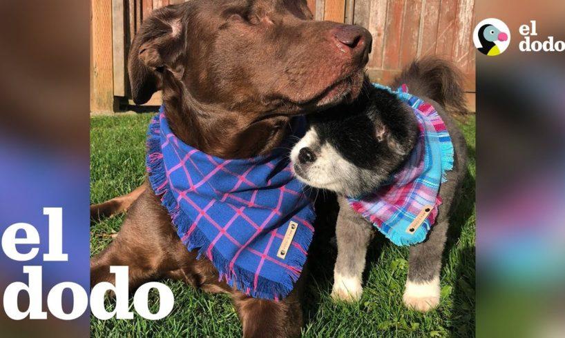 Perritos hermanos sin ojos aman tener aventuras nuevas
