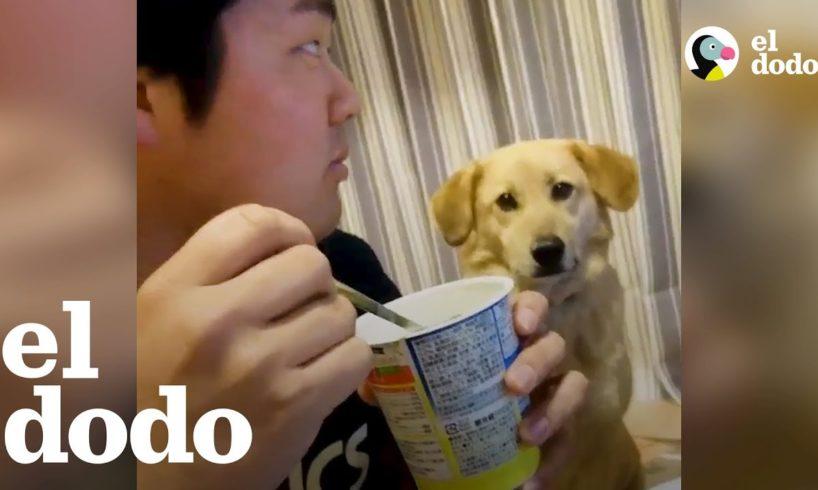 Perro Quiere un poco de yogur pero es demasiado tímido para pedirlo