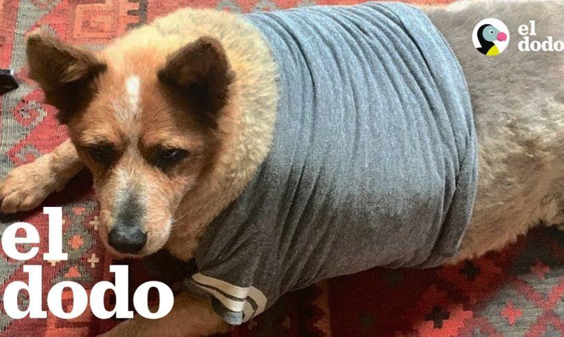 Perro con sobrepeso por fin sabe cómo se siente que lo quieren