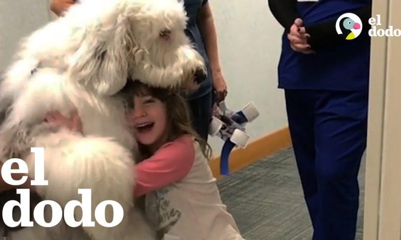Perro enorme ayuda a los niños enfermos a sentirse mejor