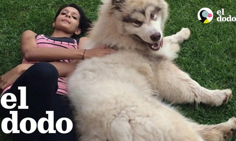 Perro enorme cree que es un cachorro