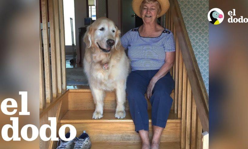 Perro mayor AMA visitar a su vecina