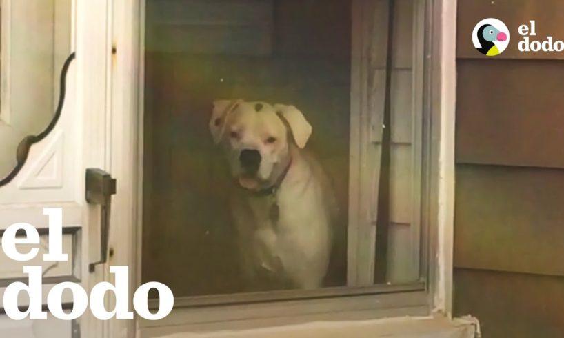 Perro no deja de mirar a su amo