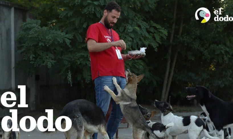 Perros en una central nuclear son agradecidos por un hombre
