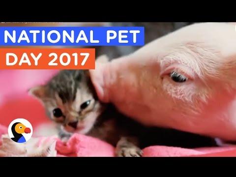 Pet Rescue: 9 Perfect Pet Adoptions & Rescues   The Dodo