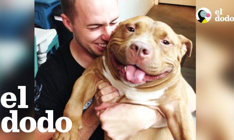 Pit Bull Sonriente Ama Mucho a su Familia Nueva